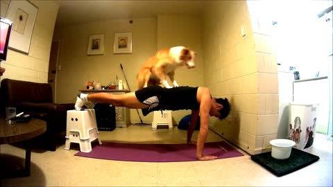 Talented Dogs Help Their Owner To Get Fit