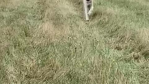 Floppy Puppy ears.