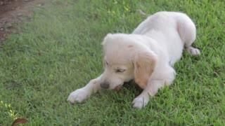 Cute dog 🐶🍁