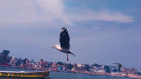 The most beautiful landscapes, sea, birds, and tranquility