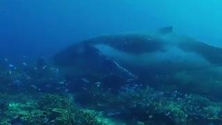 """Mar australiano é palco de """"encontro raro"""" entre mergulhadores e baleia"""