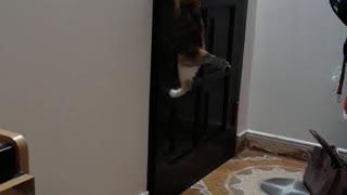 An A-Door-Able Cat