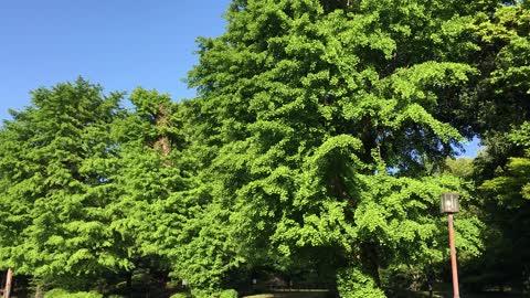 日本庭園 横浜