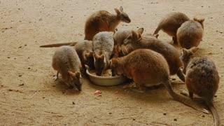 Animals mammal wildlife swetty animals videos
