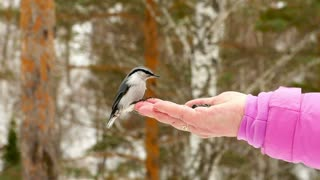 Bird feeding from womans hand - With great music