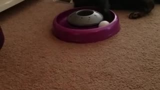 Delta playing with her new toy