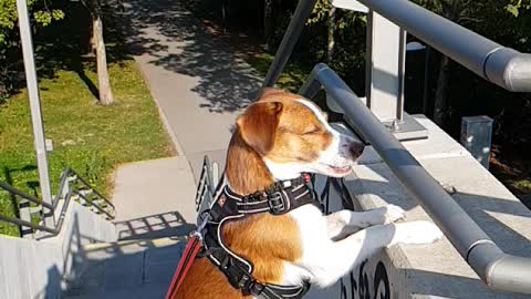 Sunny a lovely dog from Vienna Donau Wien jack russel mix