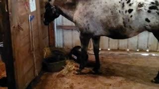 Romulus eating breakfast