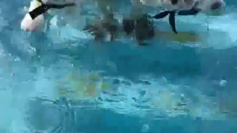 Teaching 2 PUppies How to Swim