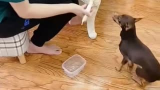 Smart Dog 😂😂😂