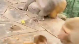 Monkeys family problems