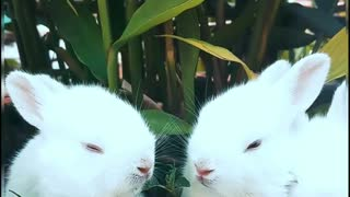 Cute funny lovely little rabbit I love it very much