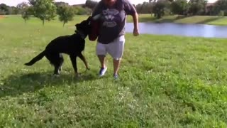 Fully Aggressive Dog with these Simple Tips