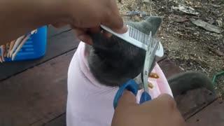 Grey Kitty Gets a New Haircut