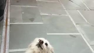 She wants her food back