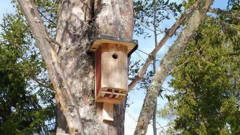 Nordic Nature Treat #1