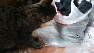 The most playful cat 3))