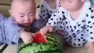 Children fighting watermelon