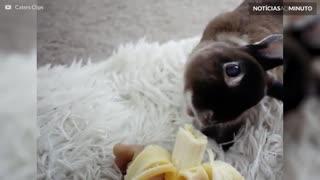 Conheça Ginny, o adorável coelho com a cabeça inclinada