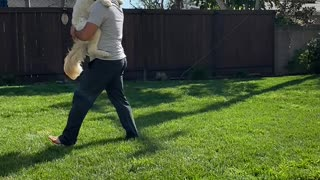 Cute Quarantine Home Workout With Doggie