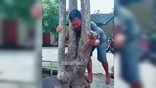 it's funny how people are pinching trees
