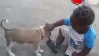 Funny Videos World 7