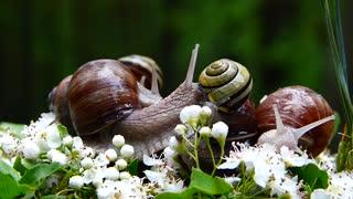 Nature Wstezyki Gajowe Molluscs Nature Music 🎶. Sound II Snails Flowers