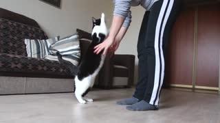 cat loves hugs - this cat loves hugs