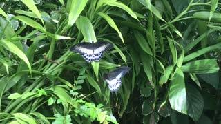 Beautiful nature freely freedom world