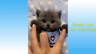 cutest cats and funny video compilation