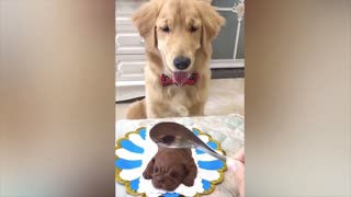 innocent dog getting scared after cake cutting.