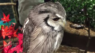 Adorable owls you can't take your eyes off