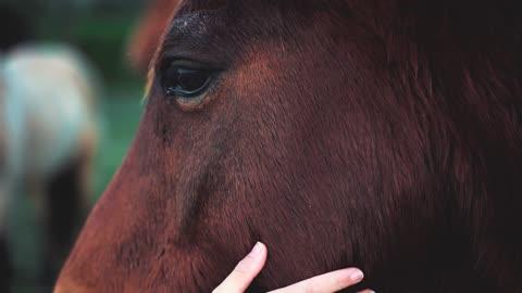 A purebred horse