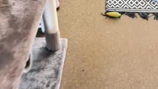 Cute cat slipping