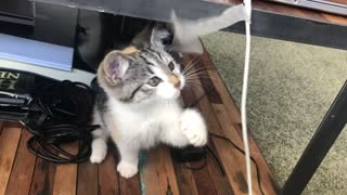 funny cat playing.0