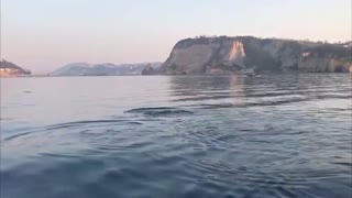 Dolphins Spotted Off Italian Coast As Nature Thrives
