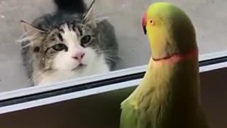 Parrot vs cat video