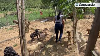 Vanguardia Investiga: Animales abandonados