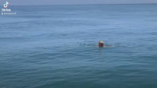 Woman Swims With A Shark