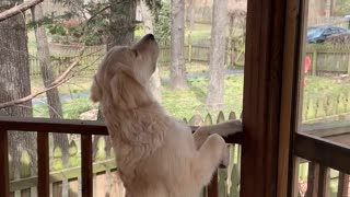 Friendly Doggy Comes Face to Face With Squirrel
