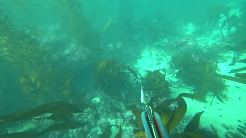 2021 Spearfishing Rockfish and Perch in Monterey County