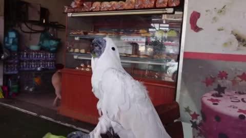 Parrot flies to admire a piece cute😍❤️️