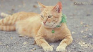 Breaking News We Seen A Cat Ceilin