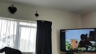 Dog Loves Watching TV