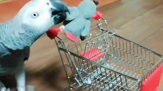 Parrots love shopping!