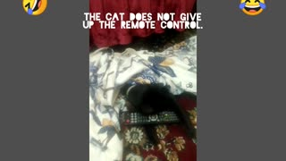 The cat does not give up the remote control.