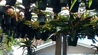 Advanced Bromeliads 26, Sarasota Florida http://advancedbromeliads.com/
