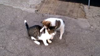 Dog and cat best friends forever