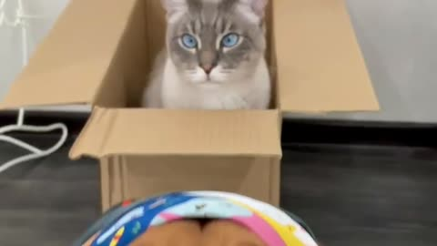 A dog with a scarf and a cat in a box
