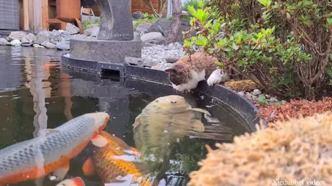 Cute Cat Kissing and Touching Fishies